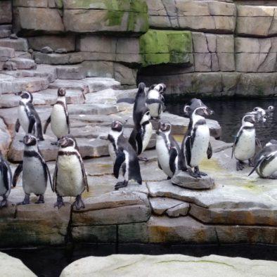 Hamborg dyrehave
